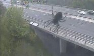 """Tá hỏa vì """"nhện khổng lồ"""" trên đường cao tốc"""