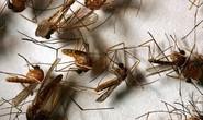 Mỹ diệt muỗi bằng máy bay không người lái