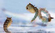 Hạt nano ngăn chặn muỗi sinh sản