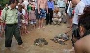 Cứu hộ thành công 7 cá thể rùa biển