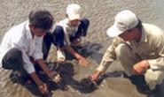 Sự cố chìm tàu chở dầu tại vùng biển cần Giờ: 3.000 ha nghêu có nguy cơ mất trắng