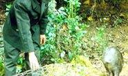 Kiểm lâm Hà Nội thả hơn 80 kg động vật hoang dã về rừng