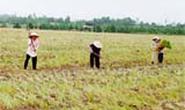 TP Hồ Chí Minh: Bỏ rau trồng cỏ, khổ theo cỏ