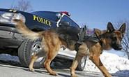 Chó nghiệp vụ tham gia phá án