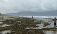 Bãi biển quyến rũ nhất hành tinh bị ô nhiễm nghiêm trọng