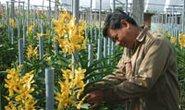 Tỉ phú trồng lan
