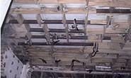 Thí điểm nuôi chim yến tại Cần Giờ