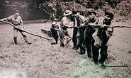 Người Sơn Lang và những phiến gỗ trong Lăng Bác