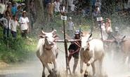 30.000 người xem lễ hội đua bò bảy núi