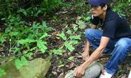 Thả 50 cá thể động vật quý hiếm về rừng