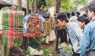 Độc đáo chợ chim Mường Khương