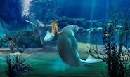"""Liên Hiệp Quốc mở chiến dịch cứu """"Nàng tiên cá"""""""