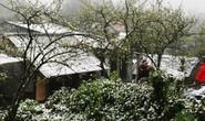 Tuyết rơi dày đặc bất thường ở Sa Pa
