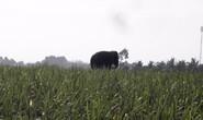 Đồng Nai di dời hơn 1.300 hộ dân để bảo vệ voi