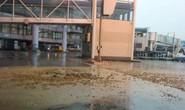 Sân bay quốc tế Nội Bài bục bể phốt