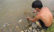 Cá chết trắng trên sông Bồng Miêu là do thuốc hột
