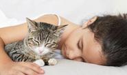 Sốc tim do nhiễm giun sán từ chó mèo
