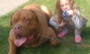 Bé gái 4 tuổi bị chó cắn đến chết