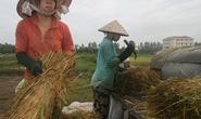 Doanh nghiệp hại nông dân