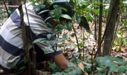Đi bẫy thú rừng, 4 người chết và mất tích