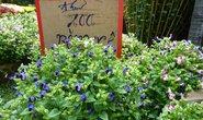 Hoa kiểng Tết bắt đầu giảm giá