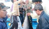 Ngư dân khổ vì cá ngừ đại dương rớt giá