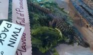 Mua rau, được khuyến mãi thằn lằn dài 15 cm