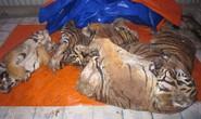 Nổ súng chặn xế hộp chở 3 con hổ