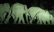 Vào rừng đào mai, một công an viên bị voi quật chết