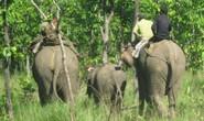 Thả voi về rừng để vết thương nhanh lành