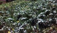 Tuyết rơi trên cao nguyên đá Đồng Văn