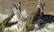 Cú đớp chết chóc của cá sấu