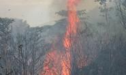Nhiều diện tích rừng đặc dụng Nam Hải Vân bị thiêu rụi