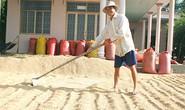 Tăng thời hạn mua tạm trữ lúa, gạo