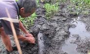 Chôn ống để xả lén nước thải