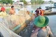 Miền Tây rộn ràng mùa cá về sông