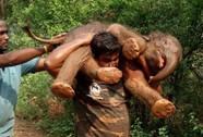 Tâm sự người vác voi
