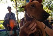 Ngắm dàn chó đắt tiền từ khắp nơi về miền Tây thi chó đẹp