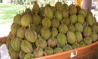 Bầu Đức tuyên bố sẽ trồng sầu riêng, bơ