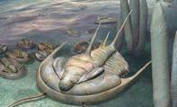 """Quái vật """"bạo chúa"""" 500 triệu năm xuất hiện nguyên vẹn tại Úc"""
