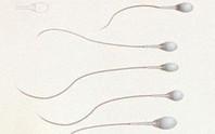Thuốc tiêm ngừa thai mới dành cho đàn ông