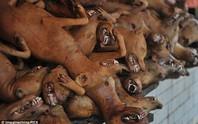 Trung Quốc: Lén tổ chức lễ hội thịt chó sớm để tránh chỉ trích