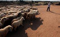 Em bé chăn cừu ngã xuống giếng chết đuối