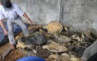 Hạ sát rùa biển bán sang Trung Quốc