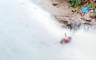 Phát hiện thi thể một người đàn ông nổi ven sông Hồng