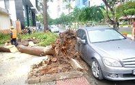 Mưa to gió lốc, cây bật gốc giữa Sài Gòn