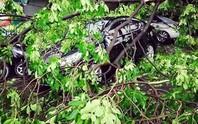 Xe nhà MC Phan Anh bị cây đè sau cơn mưa giông