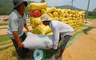 Lúa gạo Việt Nam đang thụt lùi