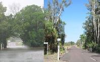 Cho chặt cây sai phép, bị phạt 20.000 USD