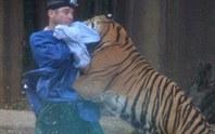 Kinh hoàng cọp vồ thủng đầu người trong vườn thú